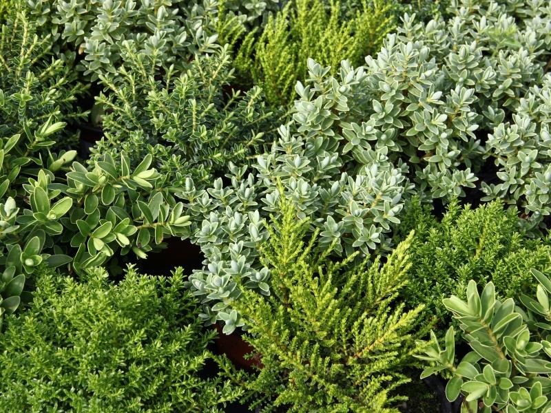 Vyhledávání novinky v zahradnictví otevření prodejní zahrady 18