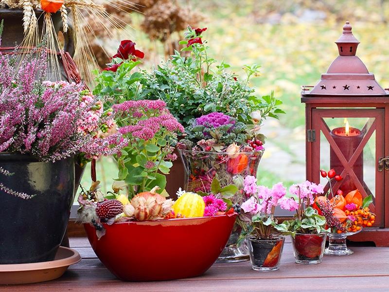 http://www.zahradnictvi-chladek.cz/images/fotobanka/podzimni-truhlikomanie-2154.jpg