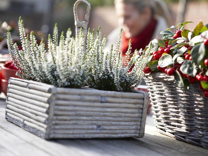 Podzimn zahrada novinka zahradnictv chl dek for Plante terrasse hiver