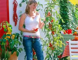 Zeleninová truhlíkománie - Obrázek