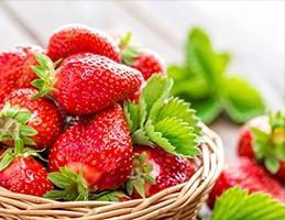 Jarní výsadba jahodníků - Obrázek