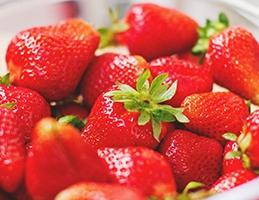 Výsadba jahodníků - Obrázek