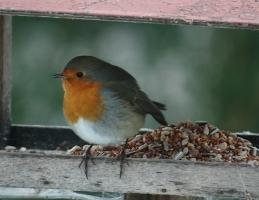 Nakrmte ptáčky - Obrázek