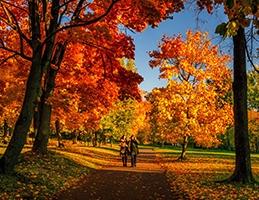 Podzim v plné síle - Obrázek