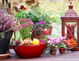 Podzimní truhlíkománie - Obrázek