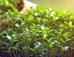 Jarní semínkaření - Obrázek