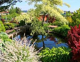 Vodní a bahenní rostliny - Obrázek