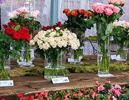 Výstava řezaných růží - Obrázek